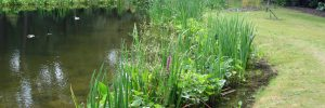 Revetment & Planting